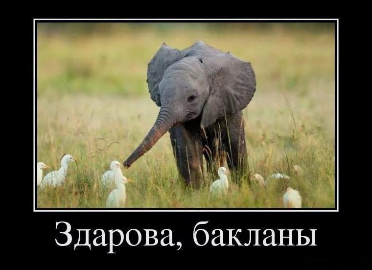 Демотиваторы про животных с приколами