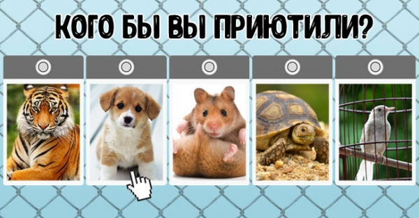 Тест: какое животное вы бы приютили? Ответ расскажет о Вашем состоянии!