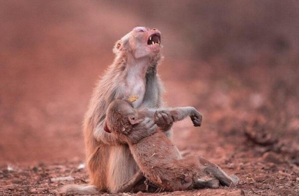 Это интересно: Могут ли животные плакать?