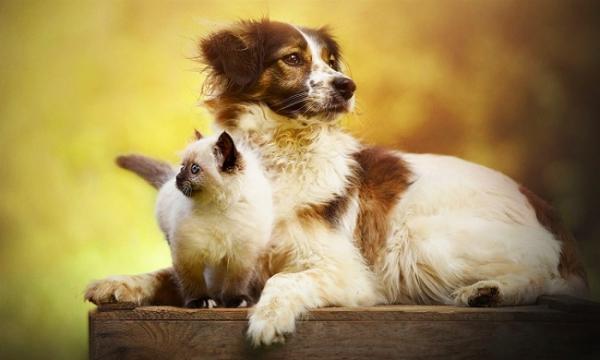 История об истинной дружбе между псом и котёнком