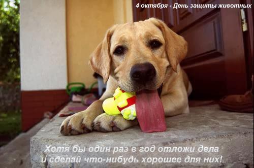 Сегодня,Всемирный День защиты животных!