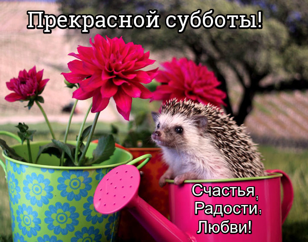 Позитивные картинки (30 фото)