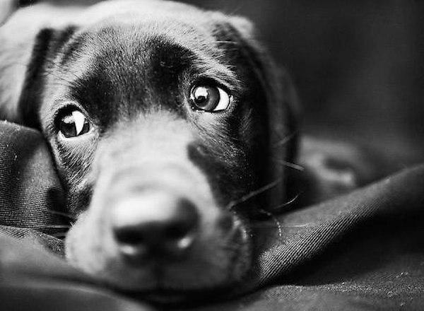 Глаза собак о многом говорят... (25 фото)