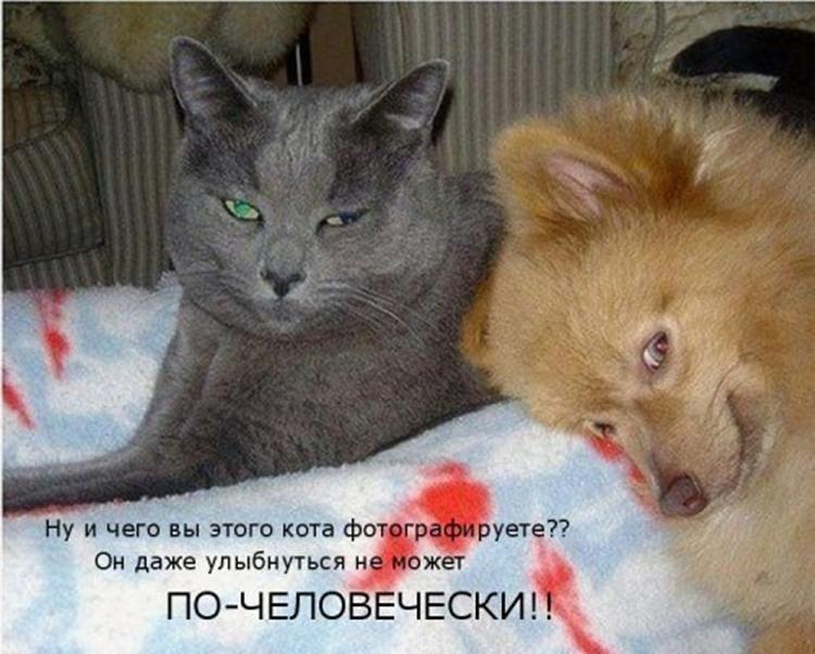 Унитазе, собака и кошка смешные фото с надписью картинки