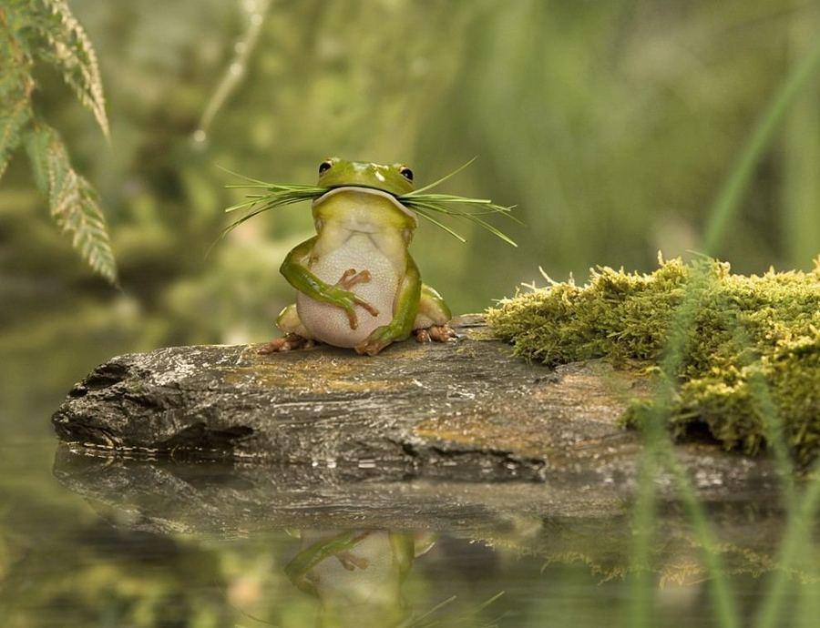 Ракеты, приколы картинки жаба