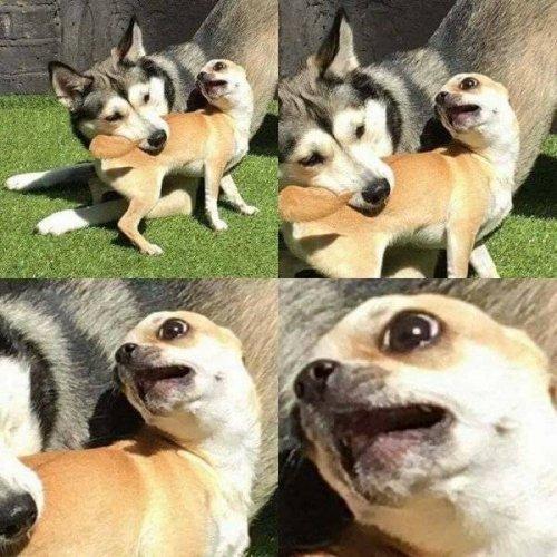 Смешные собачатки :) (25 фото)