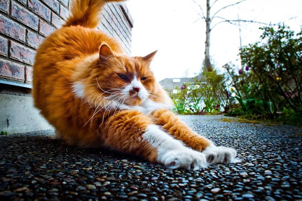Рыжие кошки прикольные картинки