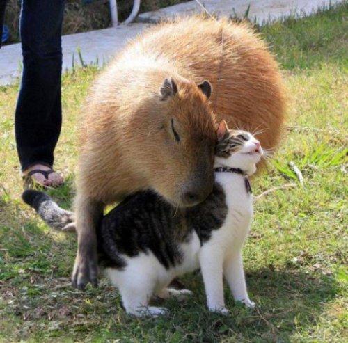 Животные-друзья (25 фото)