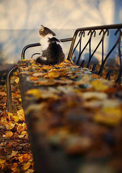 Кошачья осень (40 фото)