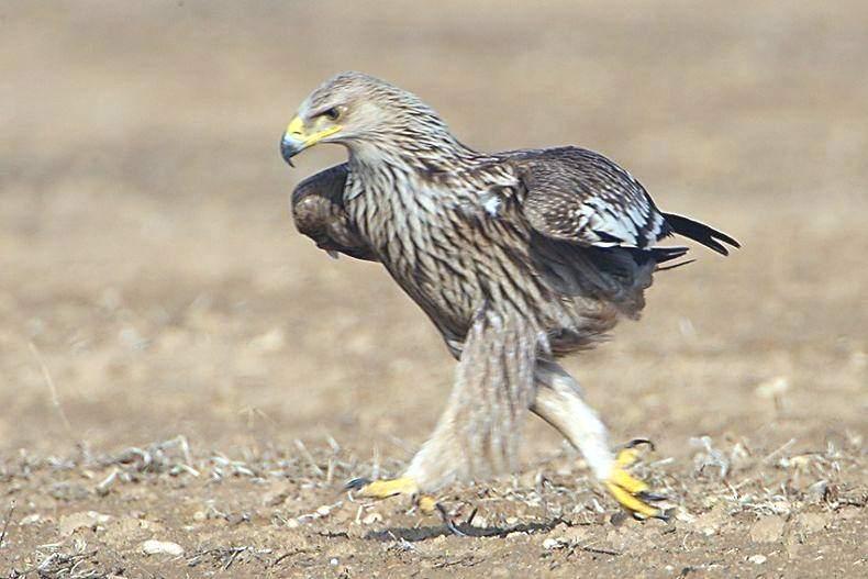Орел прикольная картинка, днем рождения