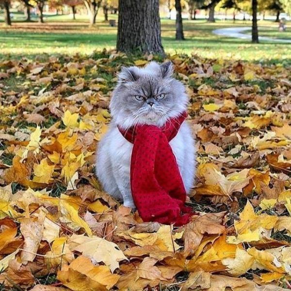 Коты без настроения (20 фото)