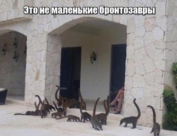"""Юмористическая фотографии на тему """"Показалось"""" (20 фото)"""