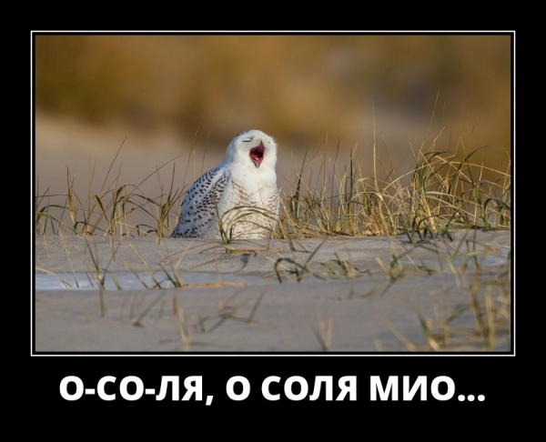 Прикольные демотиваторы (30 фото)