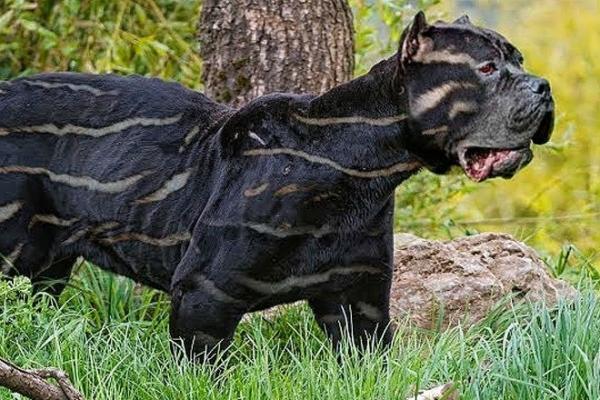 Десятка самых редких пород собак в мире