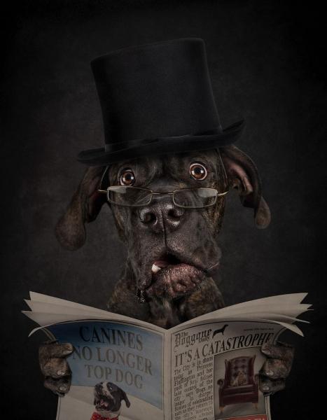 Собаки как люди (12 фото)