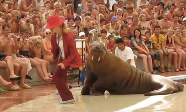 Юмор: Танцующий морж