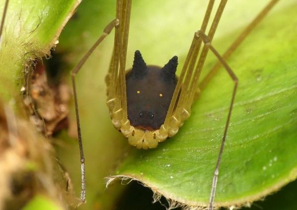 Очень странное паукообразное (3 фото+видео)
