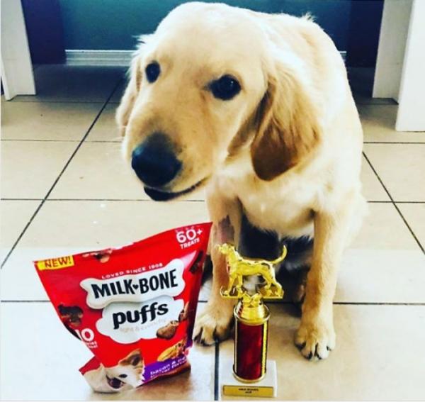 Встречаем лауреата премии «Лучшая собака года» (5 фото)