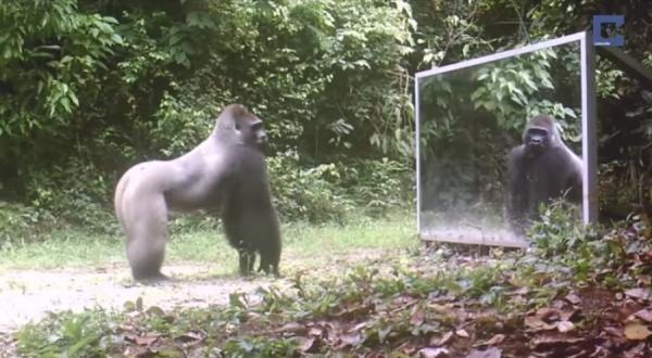 Юмор: Вот это реакция! Эти дикие животные увидели своё отражение!