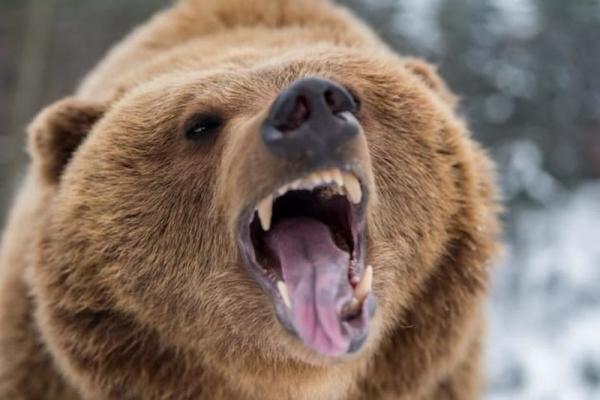 Десять случаев спасения людей дикими животными (9 фото+видео)