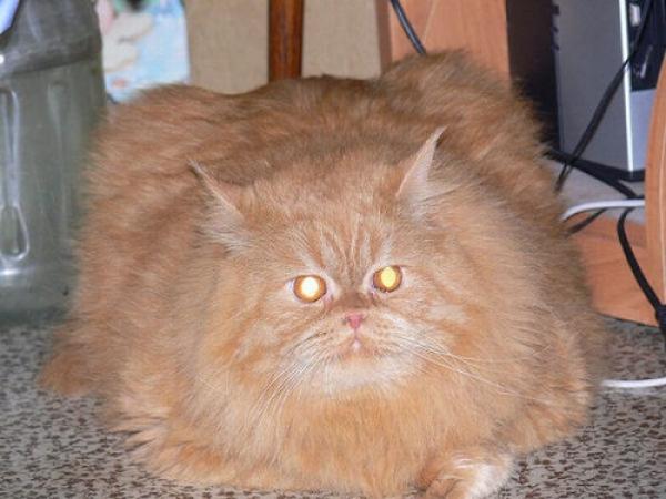Забавные толстячки (15 фото)