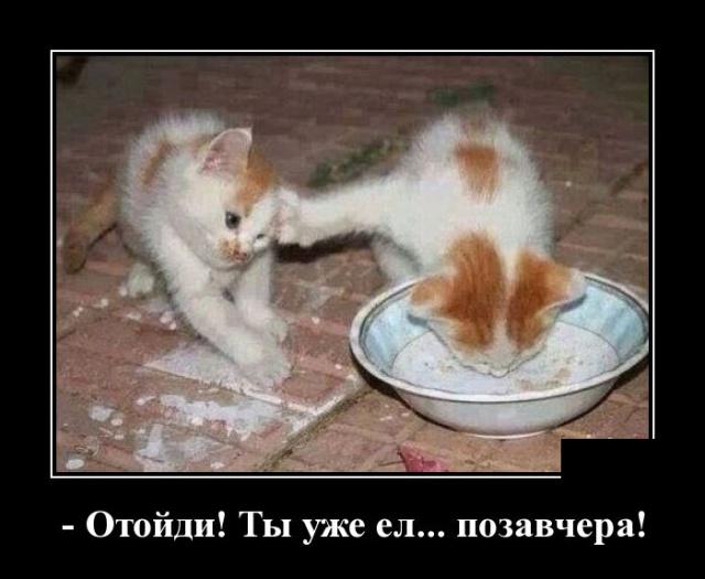 Демотиваторы про кошек смешное до слез