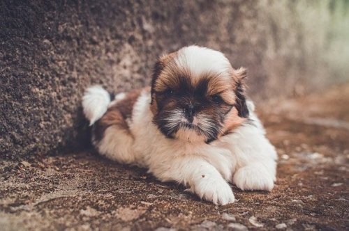 Прелестные щеночки (25 фото)