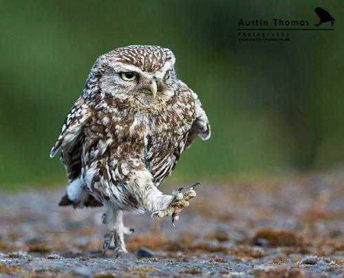Летящей походкой... (20 фото)