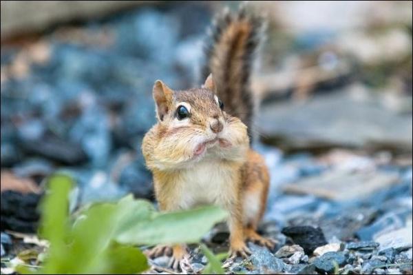 Животные удивляются (35 фото)