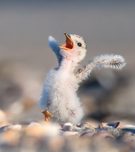 Звери тоже умеют веселиться! (35 фото)