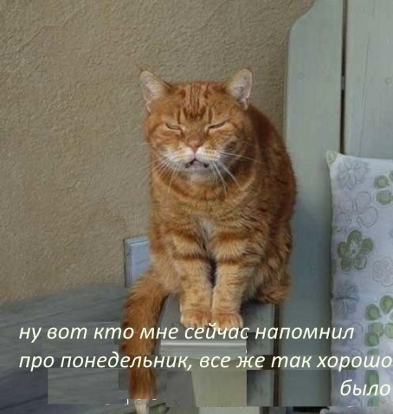 Если бы человека скрестили с котом, это улучшило бы человека, но ухудшило бы кота (20 фото)