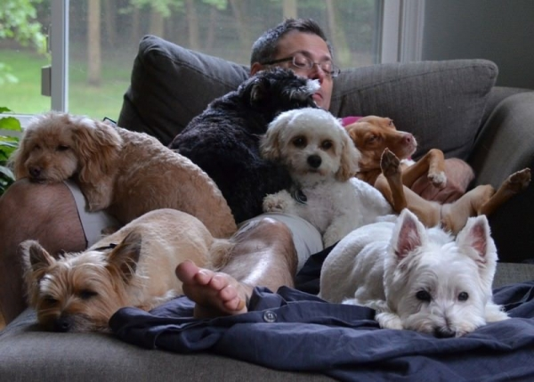 Девять научно подтвержденных причин завести собаку (10 фото)