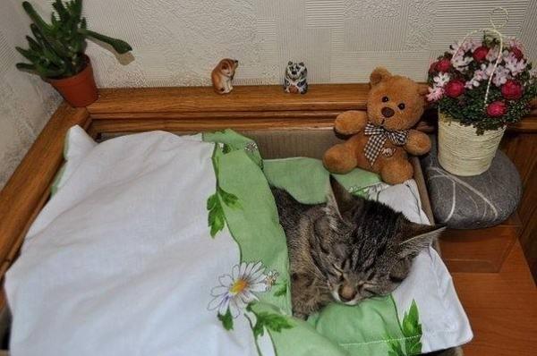 Смешные котики (30 фото)
