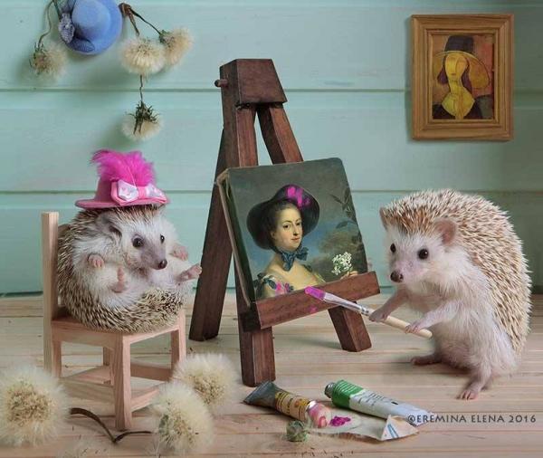 Юмор: Тайная жизнь ёжиков (8 фото)