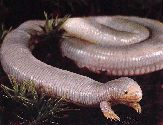 Необычные животные нашей планеты (38 фото)