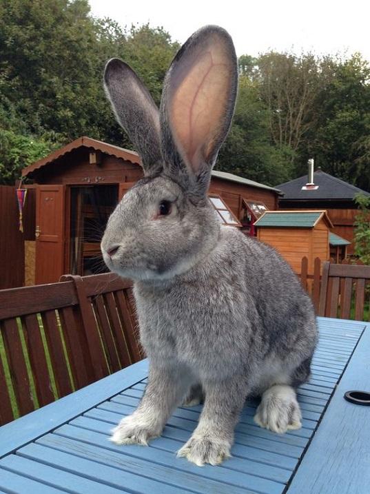Смотреть фото кроликов гигантов