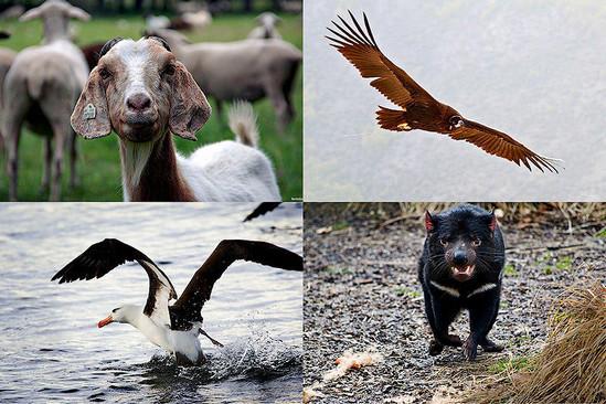 6 животных, чья сексуальная жизнь покажется человеку знакомой (6 фото)