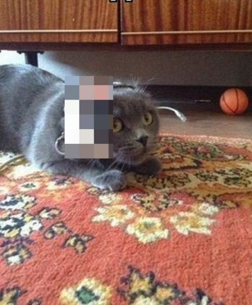 Кавардак в доме при помощи кота (2 фото)