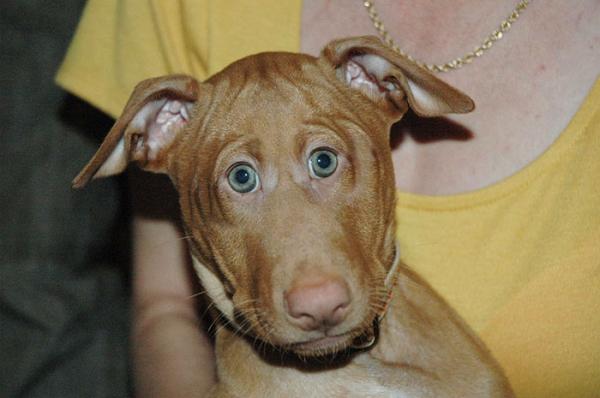 Юмор: Вот как выглядели бы животные, будь у них глаза спереди (10 фото)