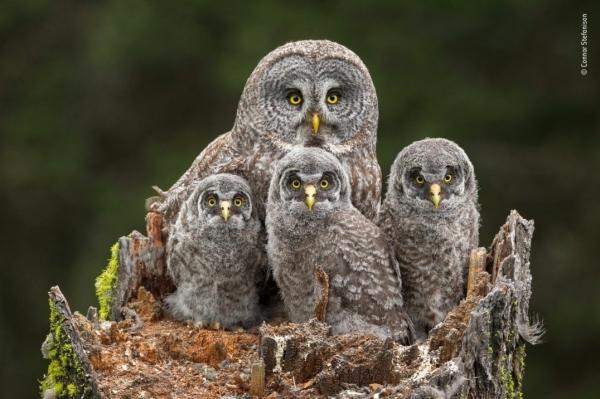 Лучшие фотографии дикой природы 2018 года (24 фото)