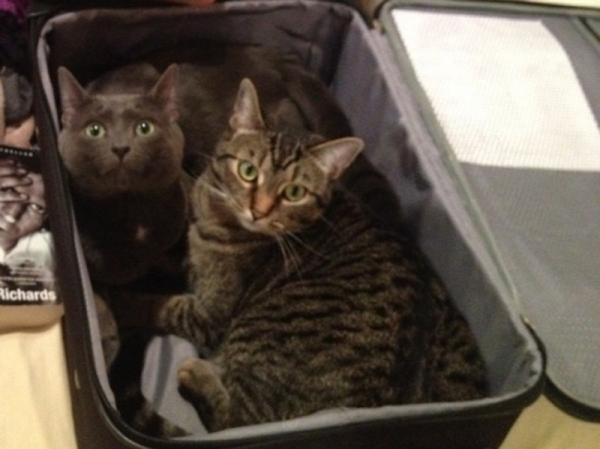 Юмор: Животные, которые отказываются верить, что их не берут с собой ( 10 фото)