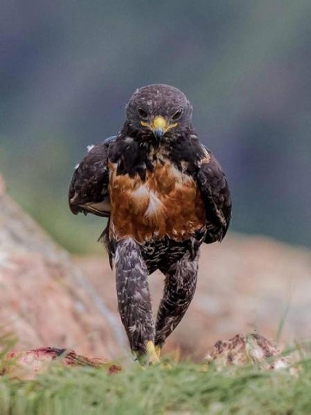 Смешные птицы,шагающие куда-то по своим делам (15 фото)