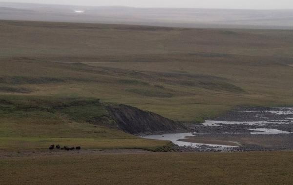 «Мамонты» на реке Мамонта (26 фото)