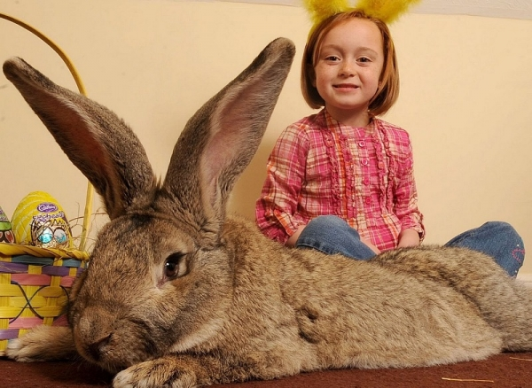 Кролики-гиганты (24 фото)