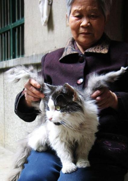 Крылатые кошки (10 фото)