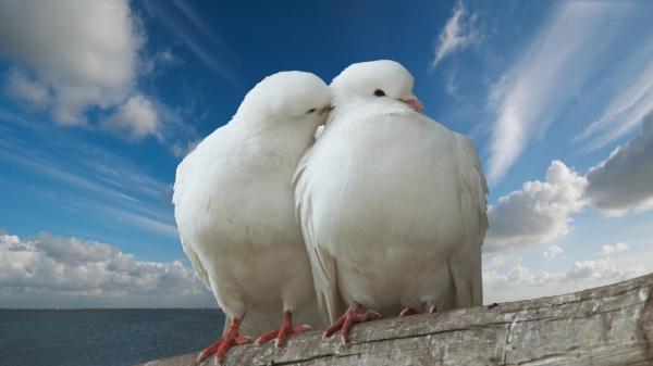 Птица мира! (16 фото)