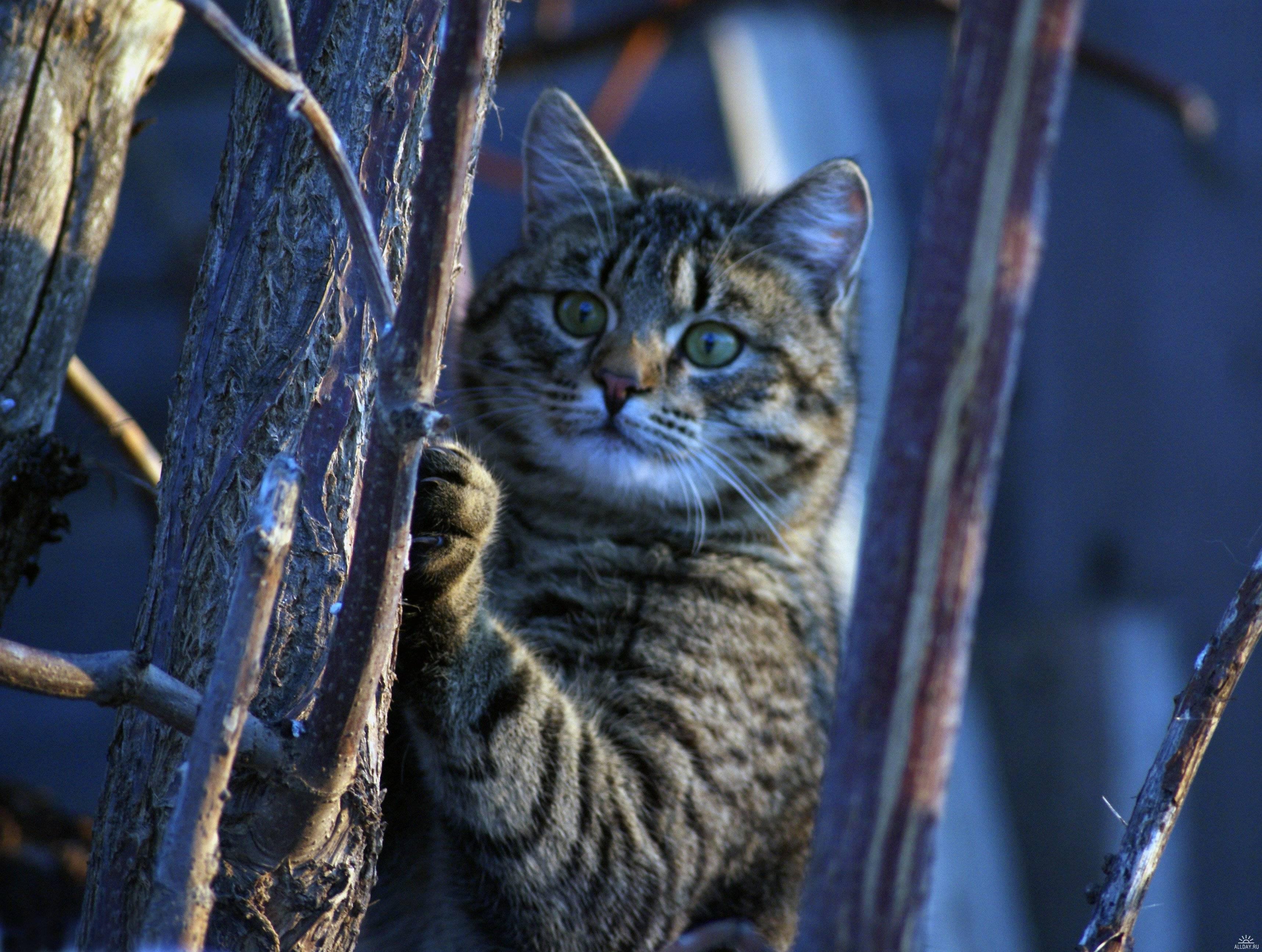так кошка мартовская картинки новогодние