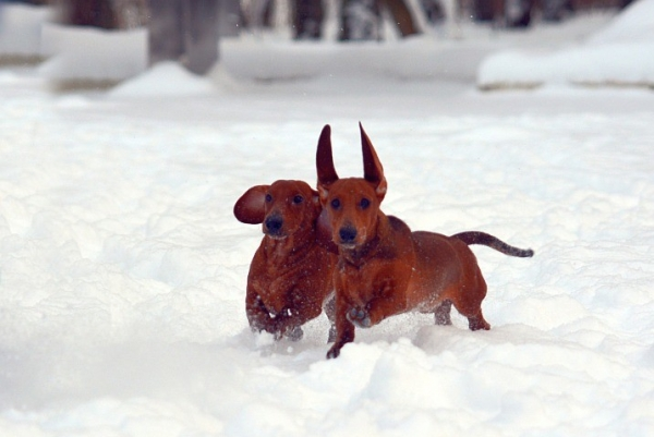 Зимние забавы на снегу (14 фото)