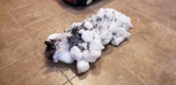 В США замерзшую под снегом кошку вернули к жизни (4 фото)