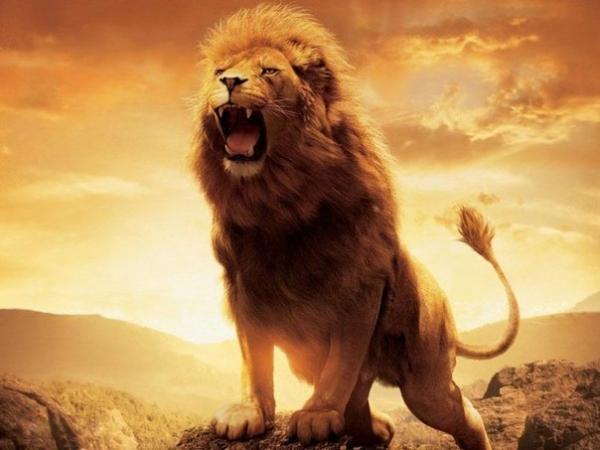 Не будь хромой лисой! Будь сильным львом!